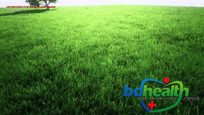 ঘাস, grass